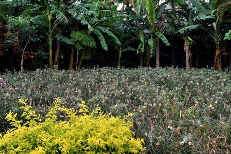 179_Pineapple_Park_Fotor.jpg