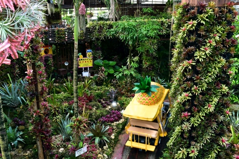 281_Pineapple_Park_Fotor.jpg