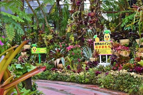 68_Pineapple_Park_Fotor.jpg